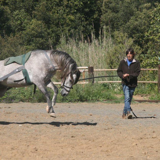 Clases de doma educativa y equitación conectada
