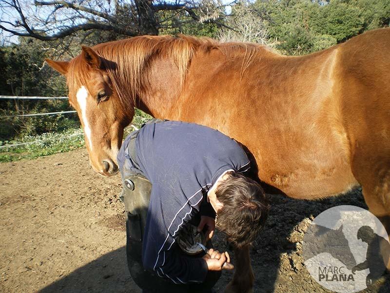 caballo descalzo o herrado