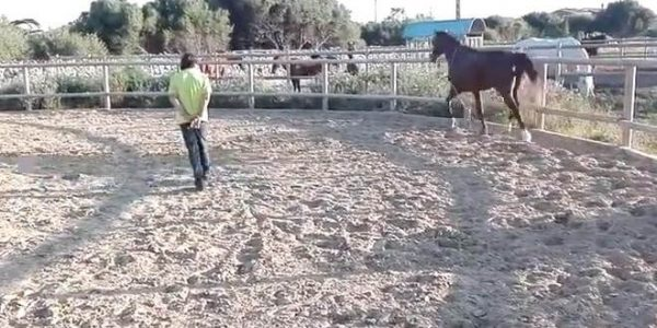 Doma educativa en el Club Hípico Haras del Mar (Menorca)-vídeo