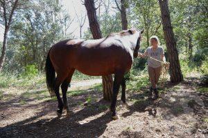 curso doma educativa Horseway juny 02