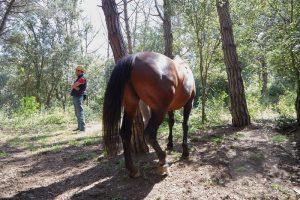 curso doma educativa Horseway juny 03