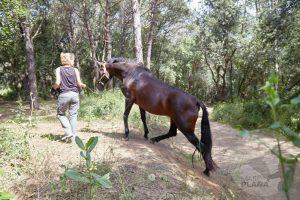 curso doma educativa Horseway juny 07