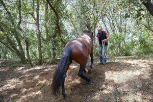curso doma educativa Horseway juny 13
