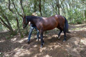 curso doma educativa Horseway juny 14