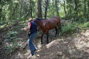 curso doma educativa Horseway juny 15