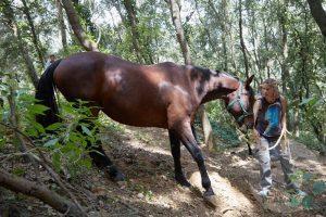 curso doma educativa Horseway juny 16