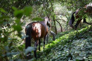 curso doma educativa Horseway juny 19