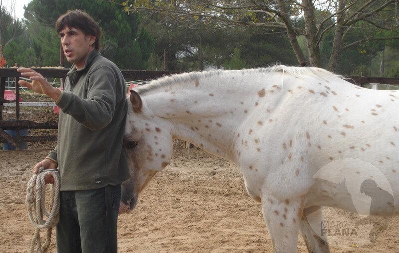 curso doma educativa con el caballo el tiempo 02