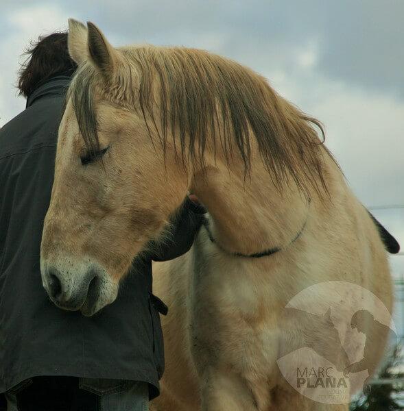 curso doma educativa con el caballo el tiempo 04