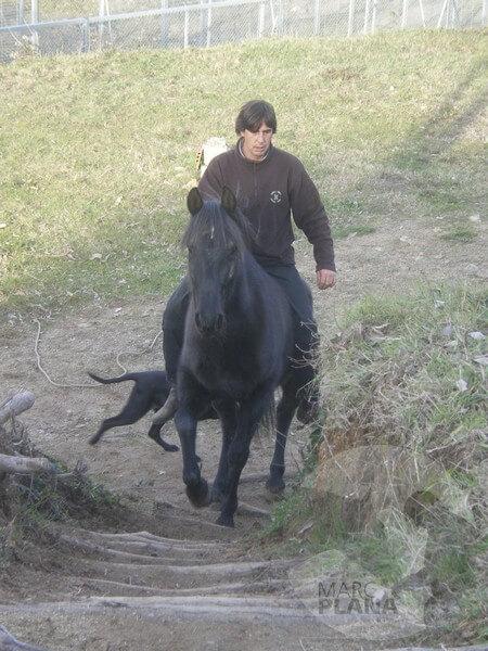 curso doma educativa con el caballo el tiempo 06