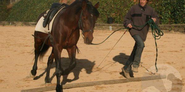 La reunión en el caballo