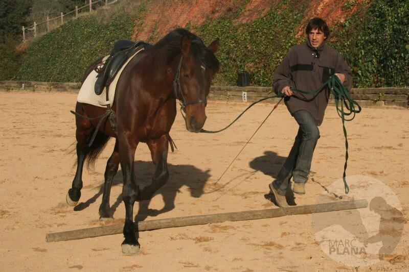 curso doma educativa la reunión en el caballo 01
