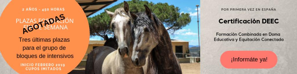 Certificación doma Educativa y equitación conectada