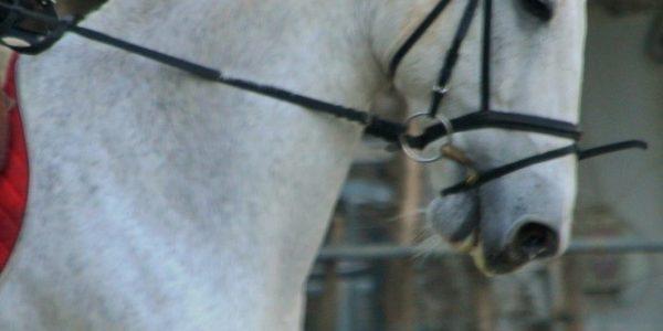 ¿Qué función tiene el filete o el bocado en el caballo?